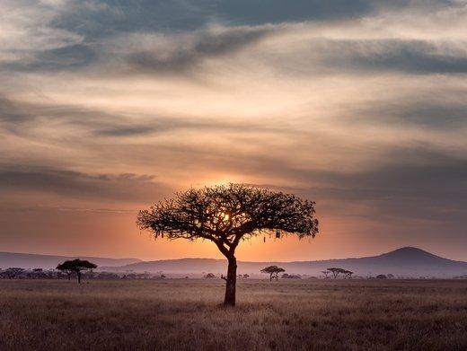 Even a tree needs more